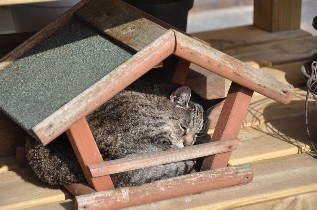 Slapende kat in vogelhuisje