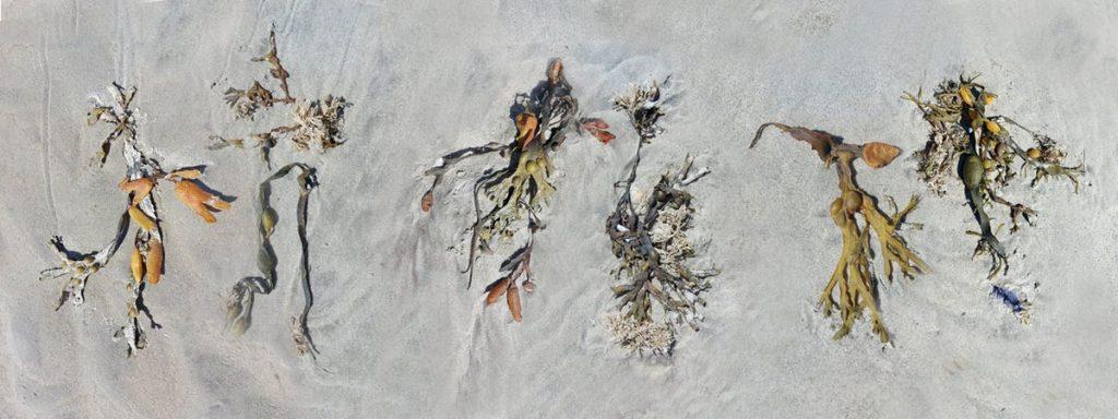Dansers op het strand